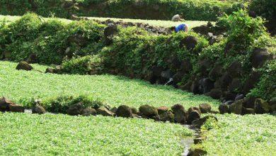Photo of Khởi động tour du lịch thăm giếng cổ Gio An và vườn sâm Bố Chính ở Quảng Trị