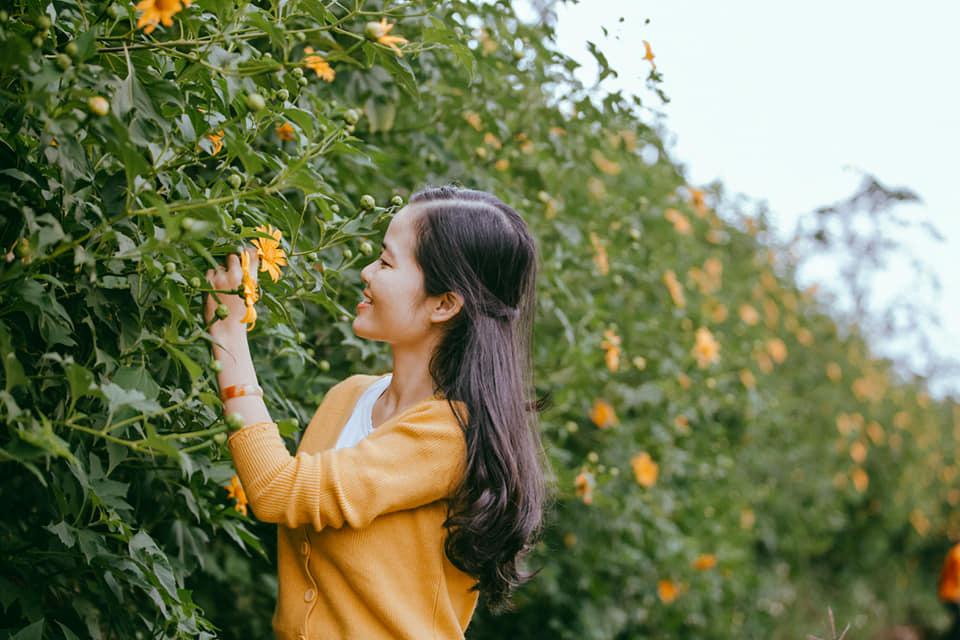 Đường hoa dã quỳ tại xã Hướng Phùng, huyện Hướng Hóa tỉnh Quảng Trị