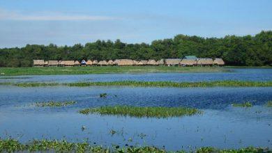 Photo of Doanh nghiệp đề xuất đầu tư dự án Khu du lịch sinh thái nghỉ dưỡng Trằm Trà lộc